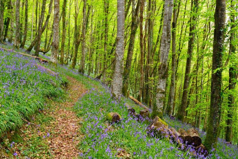 Download Klokjehout in Cornwall stock afbeelding. Afbeelding bestaande uit land - 54089701