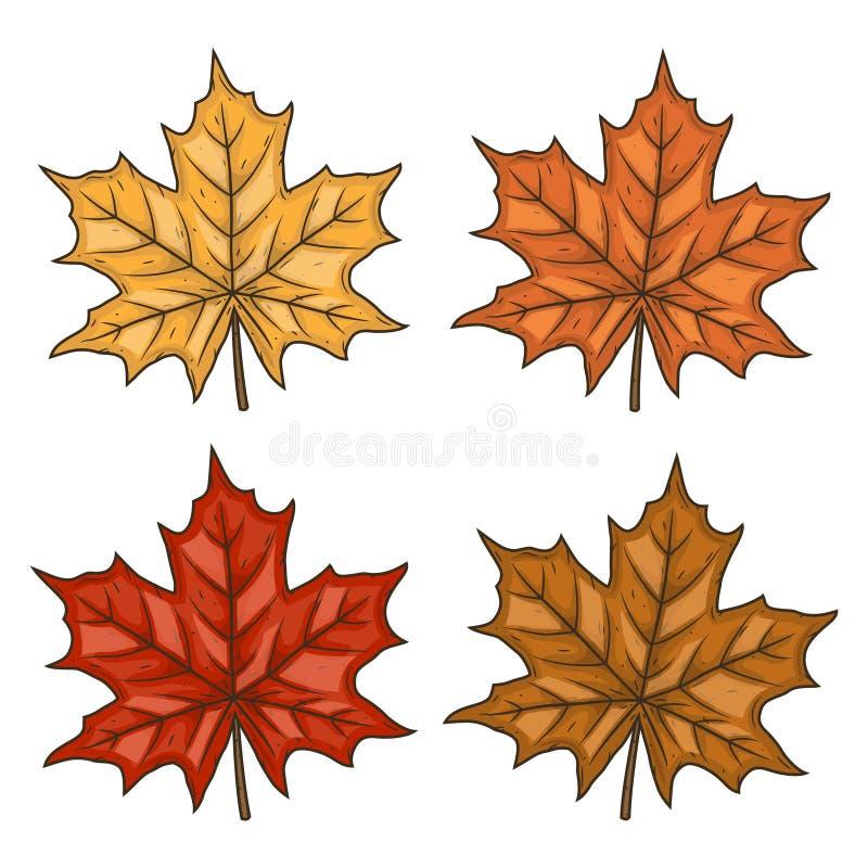 klon liści Jesień liście Ustawia liść klonowego tła ilustracyjny rekinu wektoru biel ilustracji