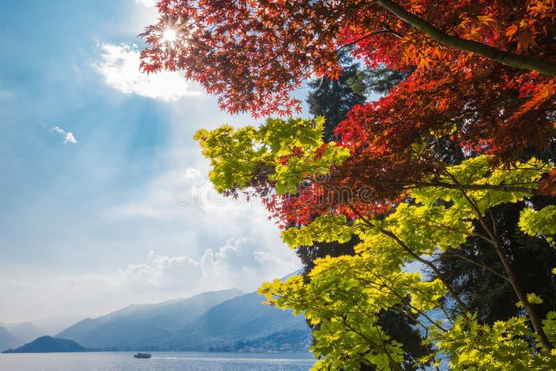 Klonowi drzewa przegapia jeziornego Como, Włochy pod zdjęcie stock