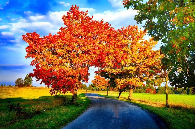 Klonowi drzewa z barwionymi liśćmi i asfaltową drogą przy jesienią, spadku światłem dziennym/ obraz stock