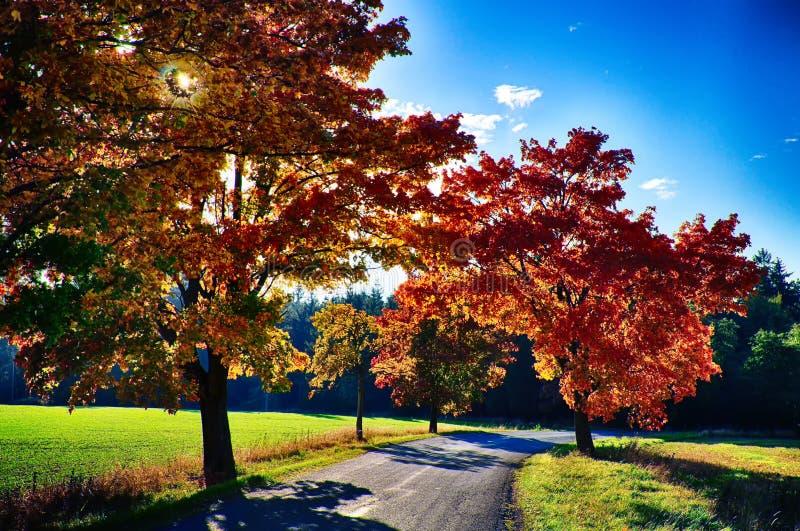 Klonowi drzewa z coloured li??mi wzd?u? asfaltowej drogi przy jesieni?, spadku ?wiat?em dziennym/ fotografia royalty free