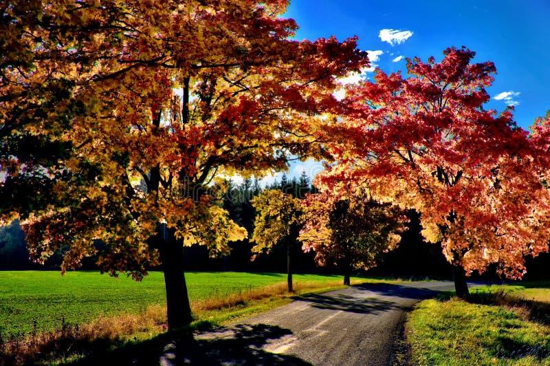 Klonowi drzewa z coloured li??mi wzd?u? asfaltowej drogi przy jesieni?, spadku ?wiat?em dziennym/ zdjęcie royalty free