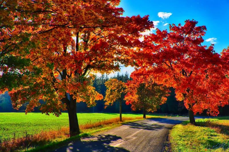 Klonowi drzewa z coloured li??mi wzd?u? asfaltowej drogi przy jesieni?, spadku ?wiat?em dziennym/ fotografia stock
