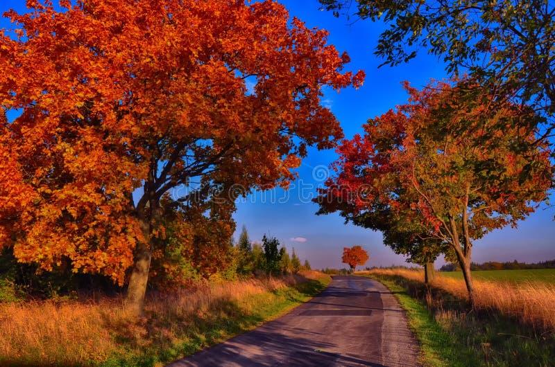 Klonowi drzewa z coloured li??mi wzd?u? asfaltowej drogi przy jesieni?, spadku ?wiat?em dziennym/ obrazy royalty free