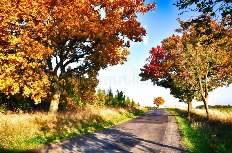 Klonowi drzewa z coloured li??mi wzd?u? asfaltowej drogi przy jesieni?, spadku ?wiat?em dziennym/ obrazy stock