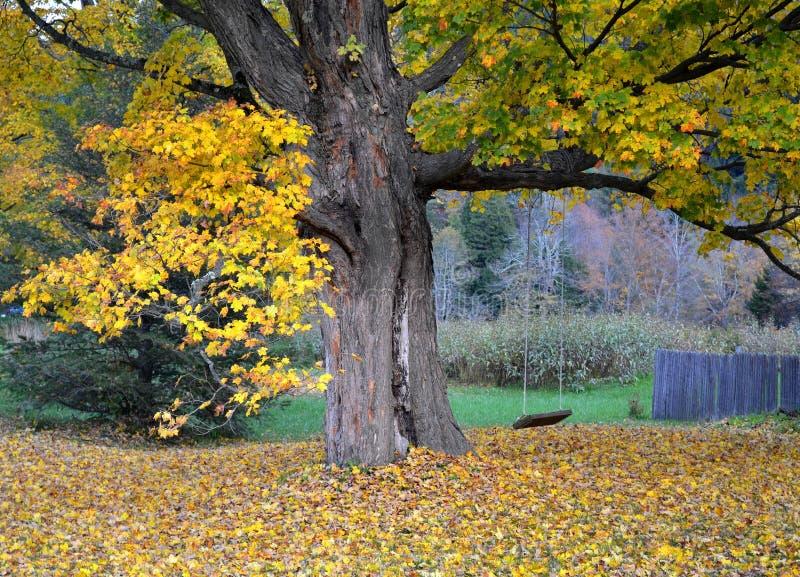 Klonowy drzewo i huśtawka obrazy royalty free