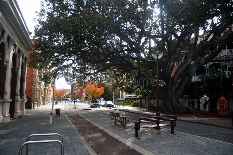 Klonowy drzewo na bruku obok drogi z klasycznym budynkiem przy Murray ulicą w Perth, Australia fotografia stock