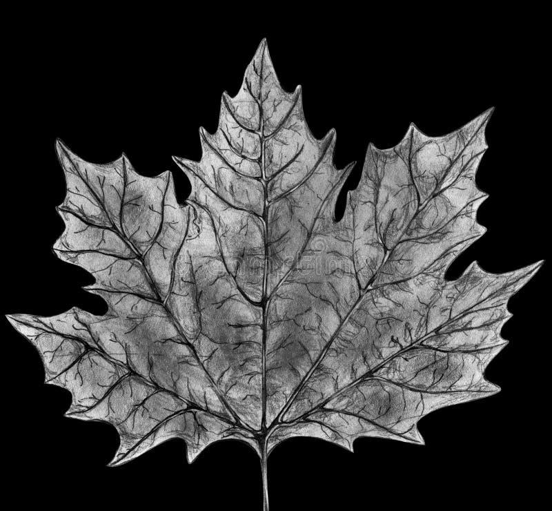 klonowy liść nakreślenie ilustracja wektor
