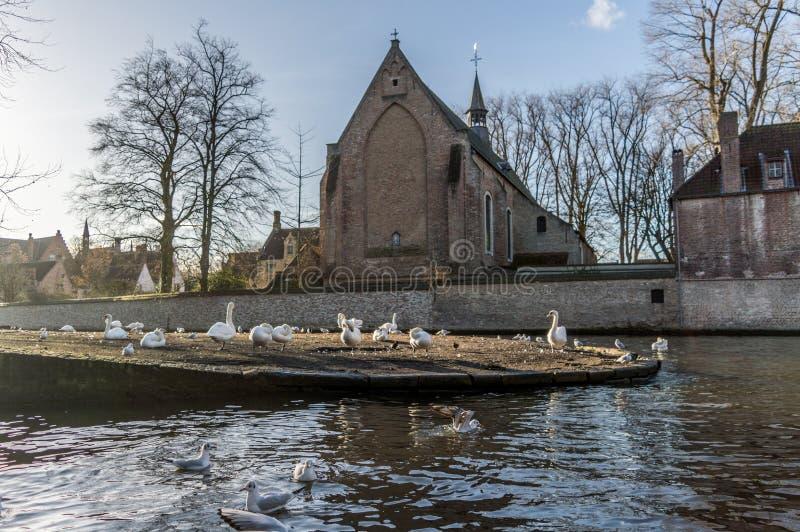 Klooster van Heiligdommen Elisabeth Sauve Garde langs de rivier met witte zwanen die in de middeleeuwse stad van Brugge, België z stock fotografie
