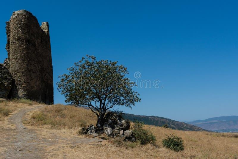 Klooster van Jvari, ruïnes van de muur, een boom onder de stenen stock afbeeldingen