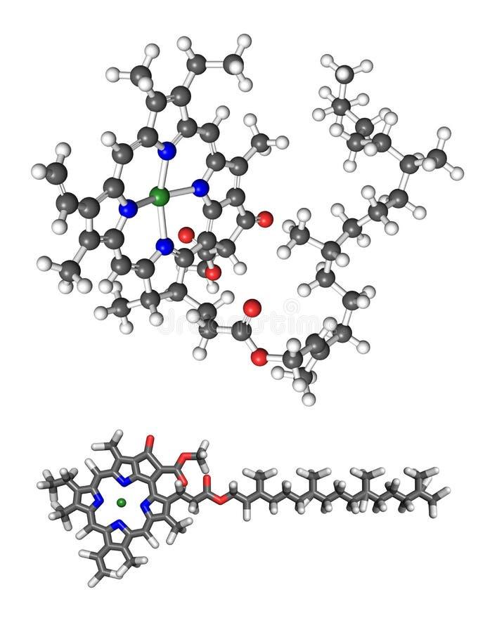 Klorofyll A royaltyfri illustrationer