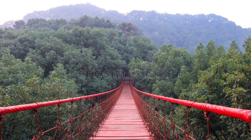 Kloster kinesisk tr?dg?rd, r?d upph?ngningbro i det Gele berget Forest Park, repbro fotografering för bildbyråer