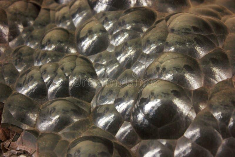 Klotformig Hematite arkivbild