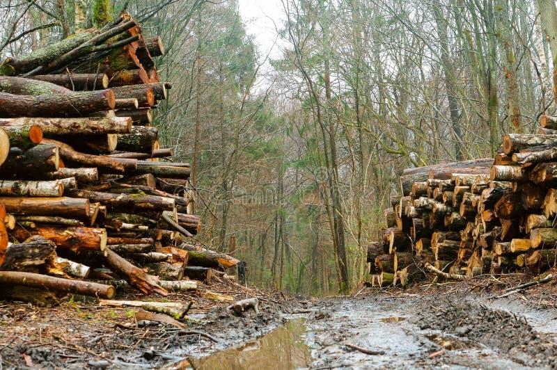 Klotz im Wald gestapelt, gehackte Bäume entlang der Straße lizenzfreie stockfotos