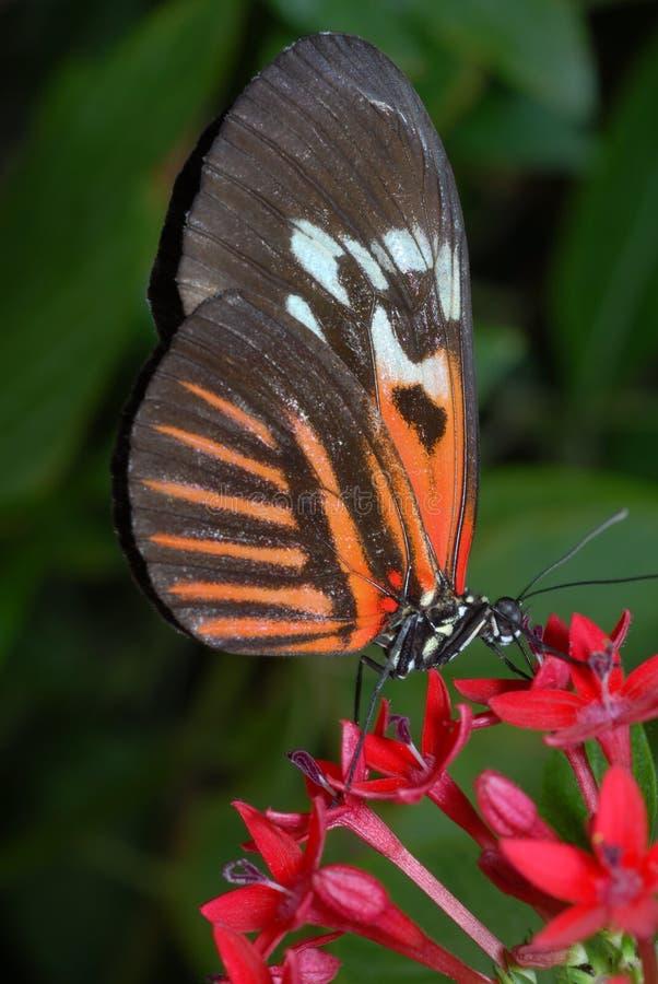 kluczowy motyla pianino fotografia stock