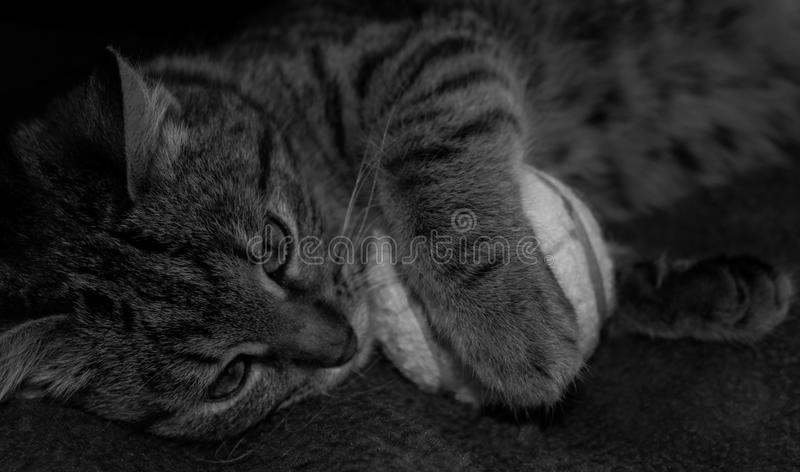 Kluge Katze stockbild