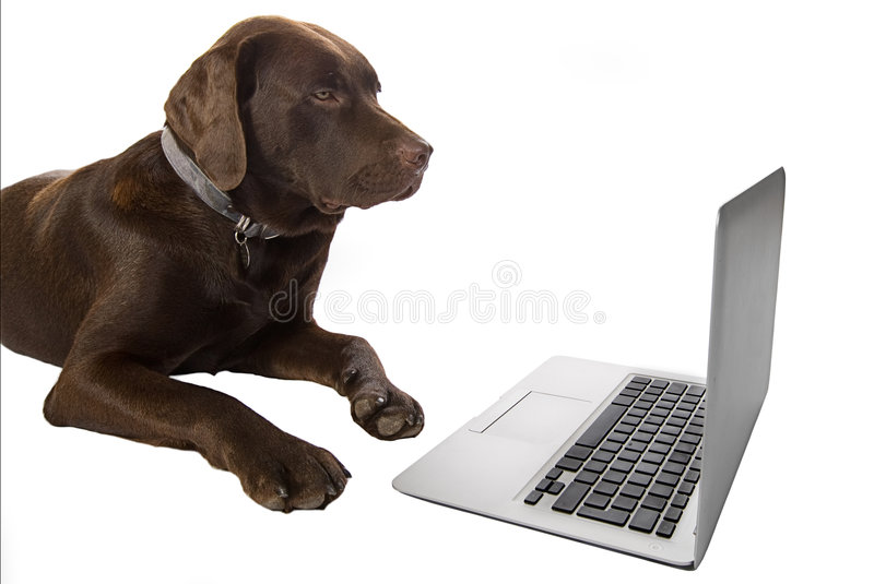 Kluges Hündchen unter Verwendung eines Laptops stockfoto