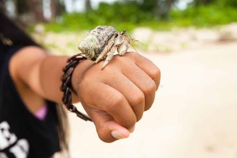 Kluizenaarkrab als Paguroidea die ook in shell wordt bekend royalty-vrije stock foto