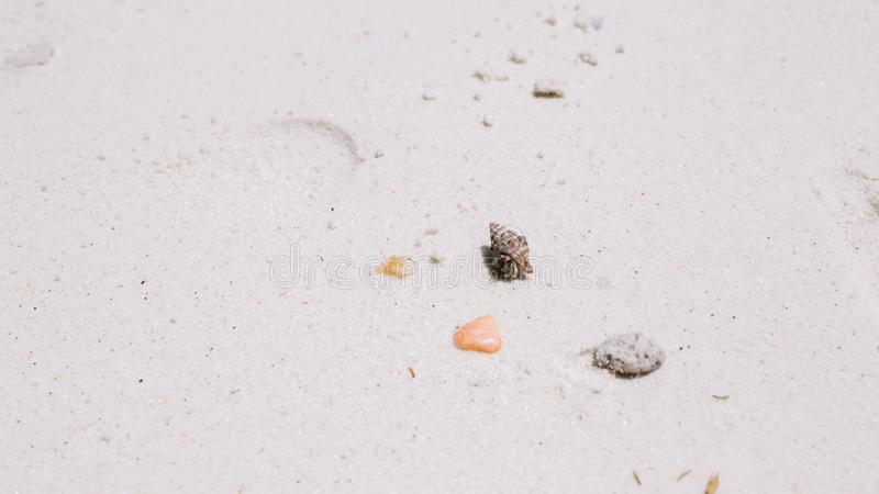 Kluizenaarkrab die op het strand lopen stock afbeelding