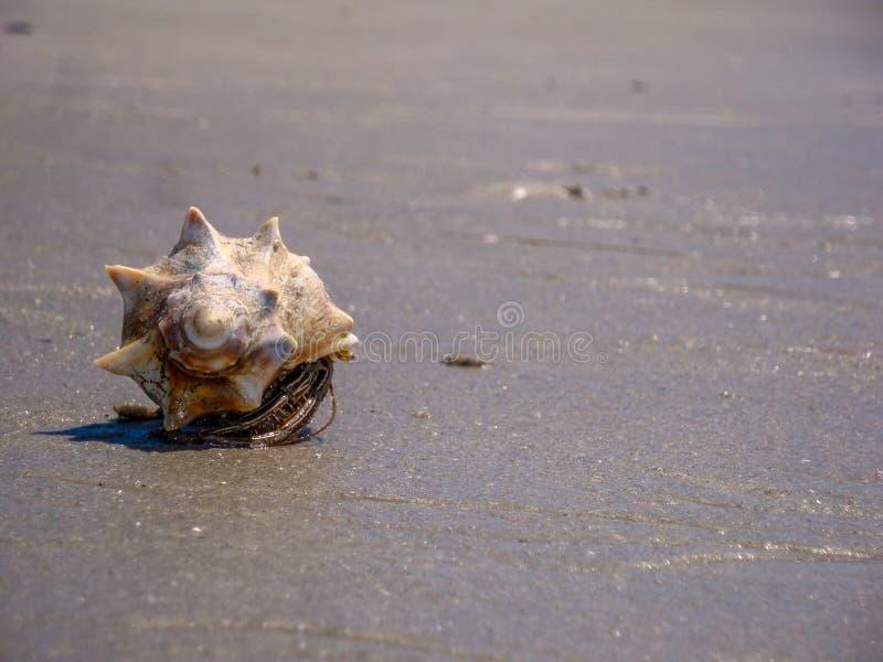 Kluizenaarkrab op Carolina Beach royalty-vrije stock afbeeldingen