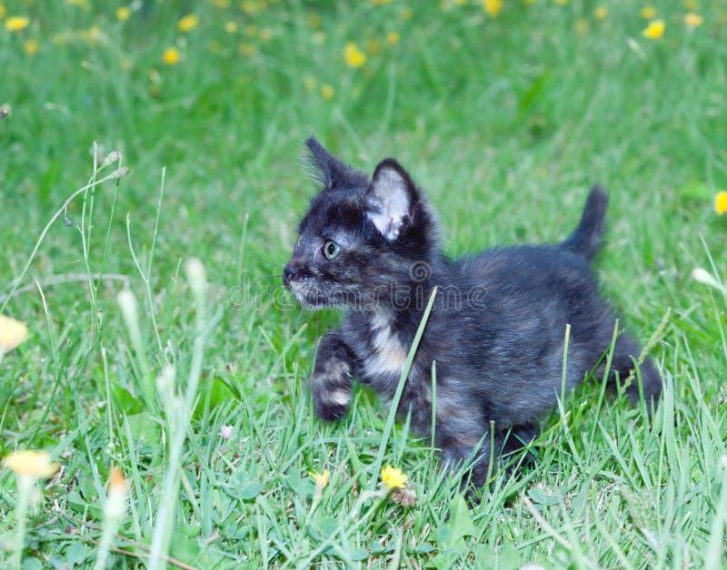 Klumpig liten kattunge på royaltyfri fotografi