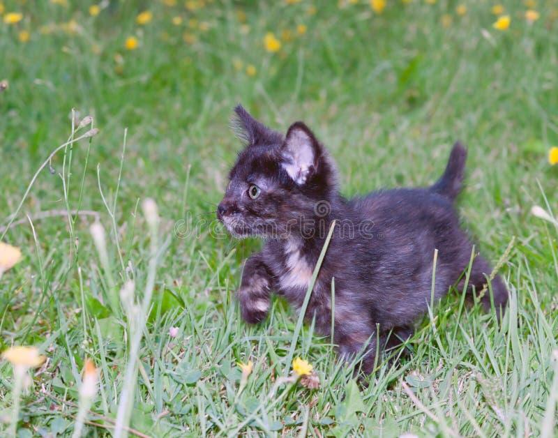 Klumpig liten kattunge på royaltyfri bild