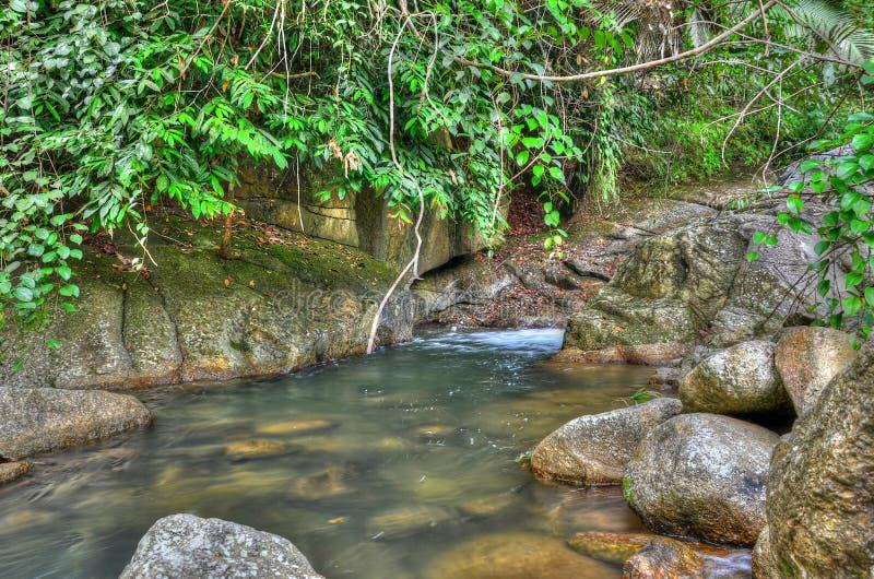 Klumpvatten i djungeln fotografering för bildbyråer