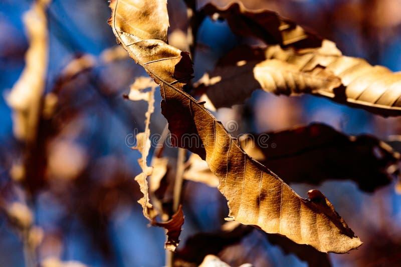 Klunga av dödsidor på ett träd arkivfoton