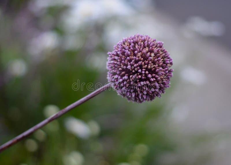 Klunga av små blommor royaltyfria bilder