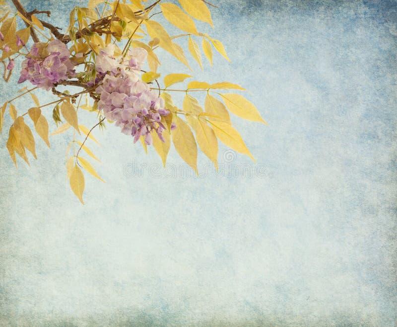 Klunga av wisteriaen i vår. royaltyfria foton
