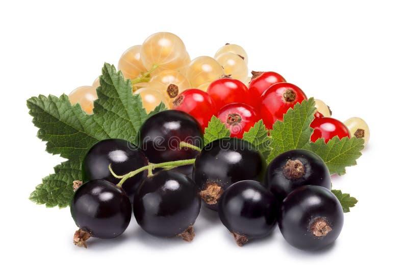 Klungor (grupper) av röda, vita och svarta vinbär tillsammans royaltyfri foto