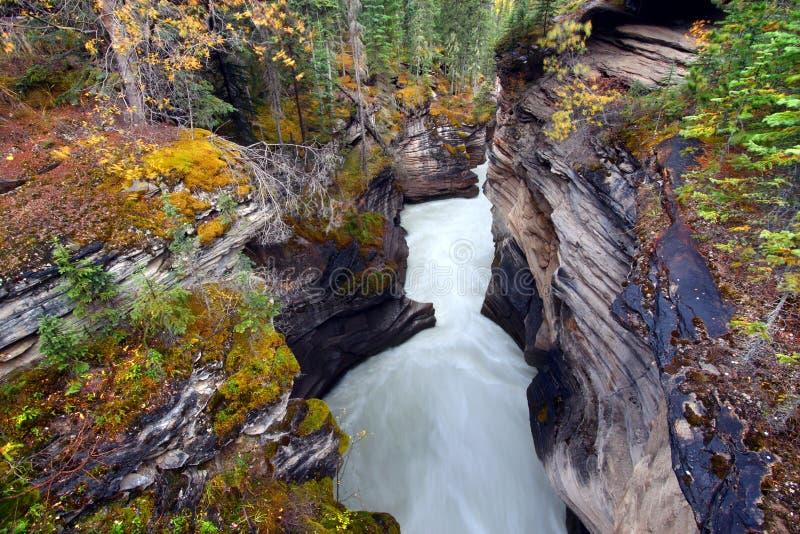 klyfta för athabascaKanada falls fotografering för bildbyråer