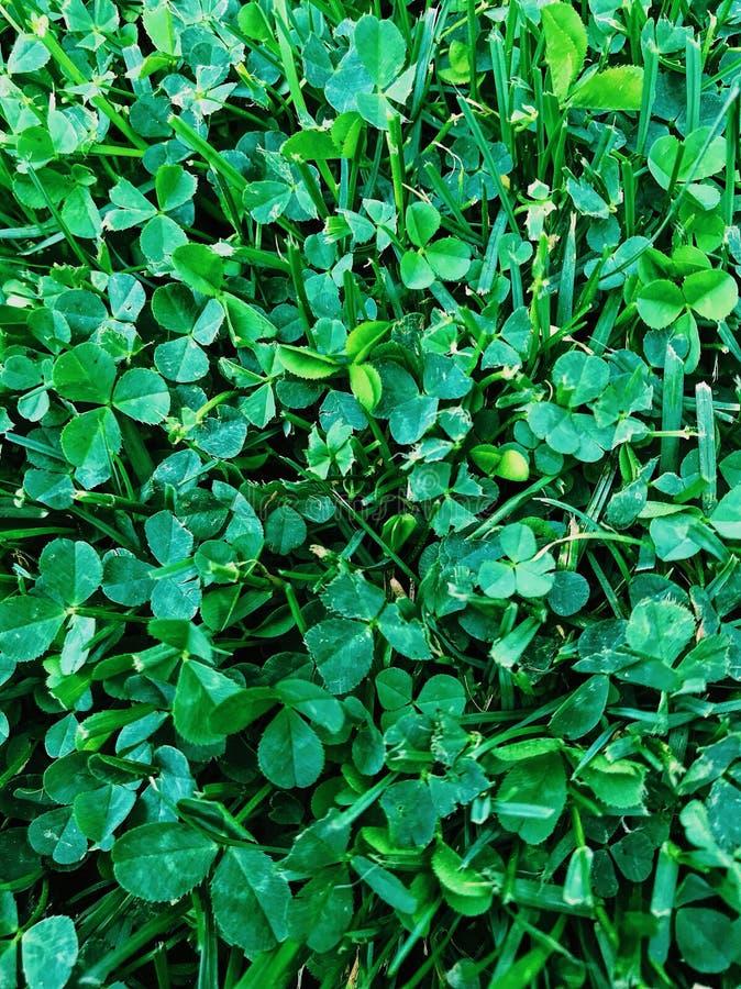 Klyftig grön bakgrund arkivfoton
