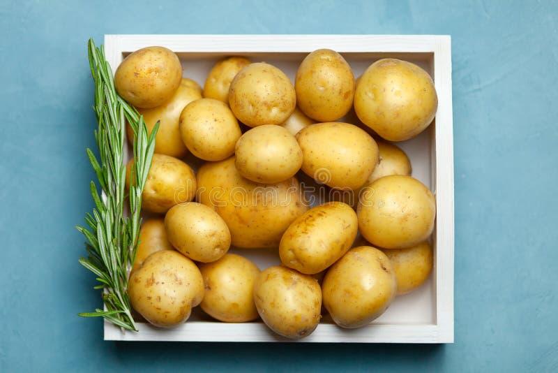 Knölar för rå potatis med rosmarin på blå bakgrund royaltyfri fotografi