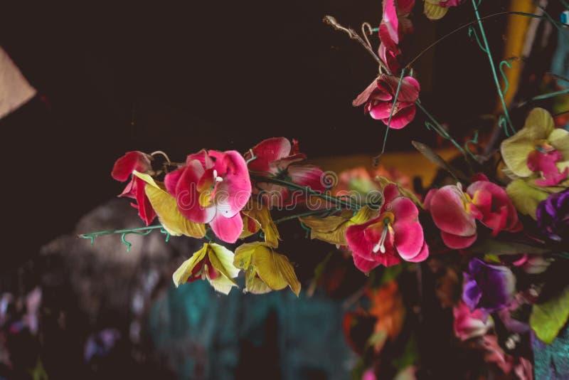 Knacka blommor på väggarna av huset royaltyfri foto