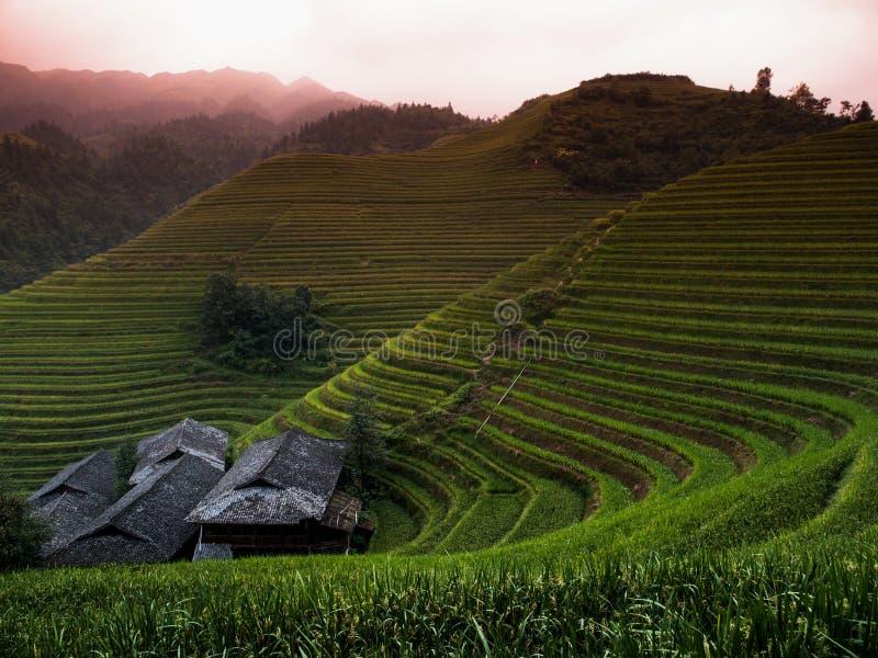Knacka terrasser för ett ris arkivbilder