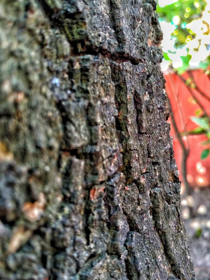 Knackt einen Baumstamm lizenzfreies stockbild