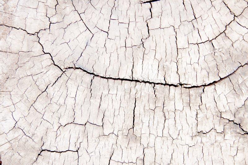 Knackte alte hölzerne Ringlinie der Draufsicht Muster der Baumstammbeschaffenheit für Hintergrund stockfotos