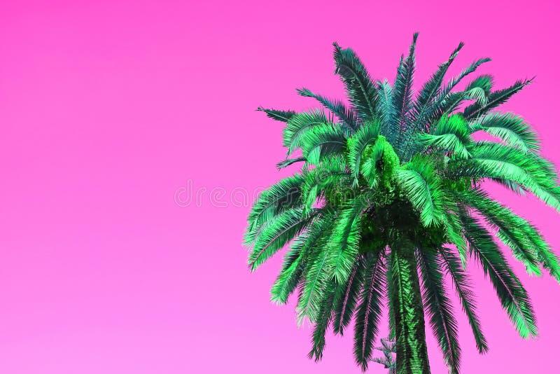 Knall-Art Style Vibrant Green Palm-Baum auf klarem rosa Hintergrund stockbilder