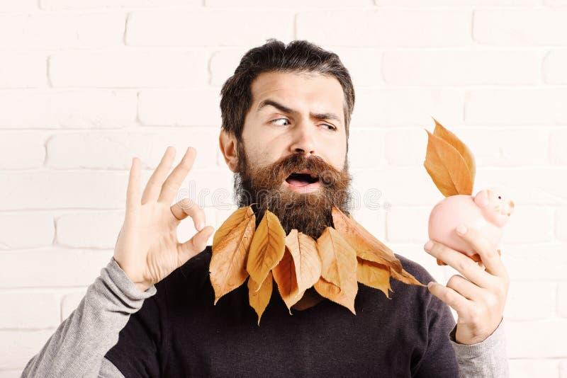 Knappe gebaarde mens met modieuze snor en de herfst gele bladeren in lange baard op grappig gezicht met roze piggy varkensbank royalty-vrije stock foto's