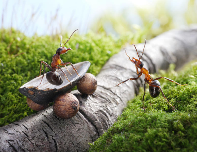Knappe lift! lift, mierenverhalen stock fotografie