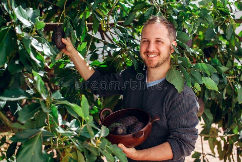 Knappe mens die het gewas van avocado krijgen stock afbeelding
