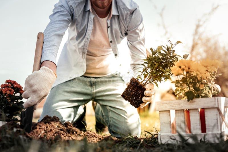 Knappe mens die met baard kruid in land planten stock fotografie