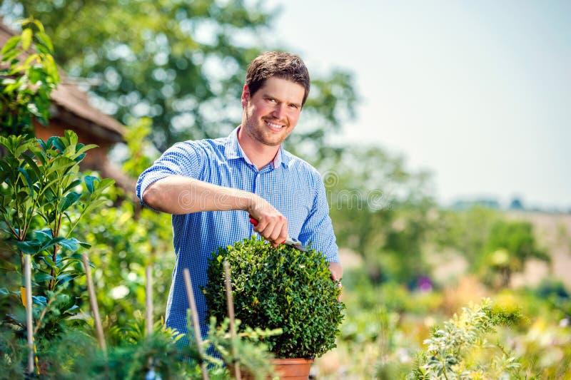 Knappe tuinman die weinig bukshoutstruik, groene zonnige natur snoeien royalty-vrije stock foto