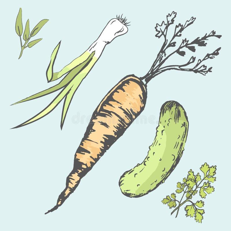 Knapperige Wortel, Groene Komkommer en Verse Greens royalty-vrije illustratie