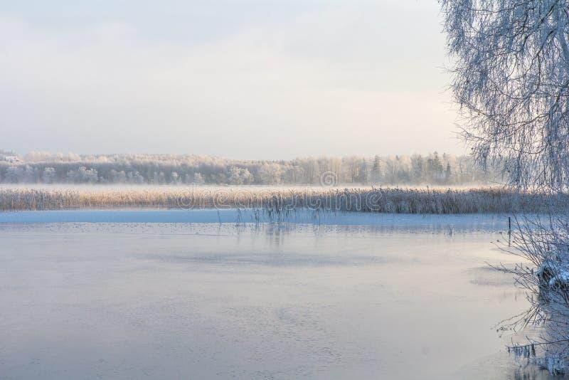 Knaprig vintermorgon i Estland arkivfoton