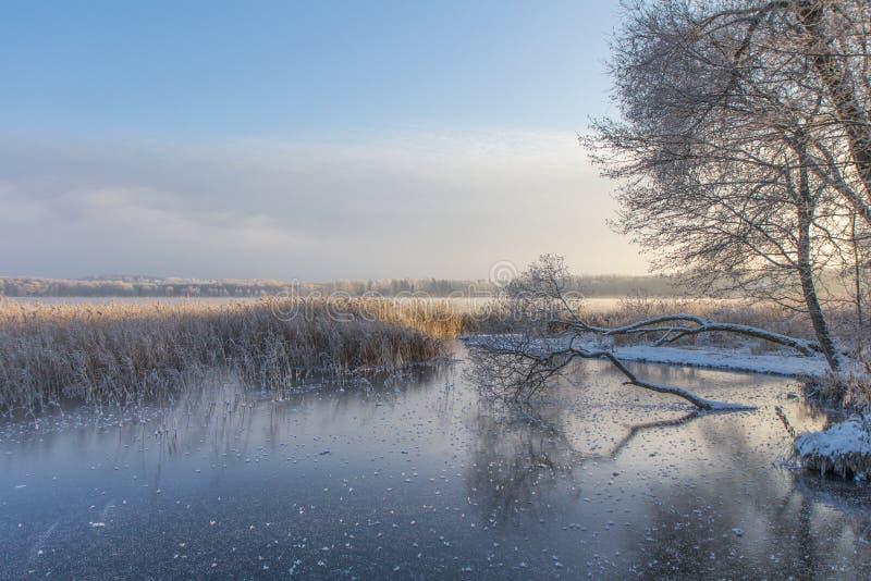 Knaprig vintermorgon i Estland royaltyfria foton