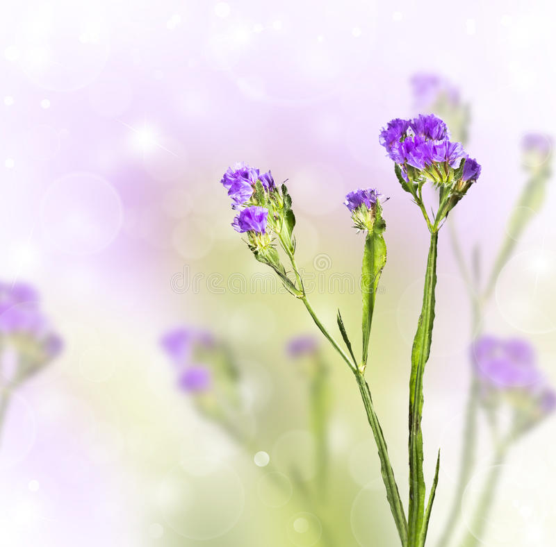 Download Knapweed On A Blurred Background Stock Image - Image: 26434127