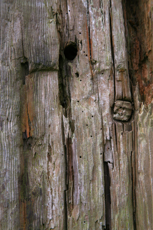 Knarled wooden gate post royalty free stock photos