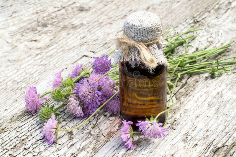 Knautia arvensis och farmaceutisk flaska royaltyfria foton